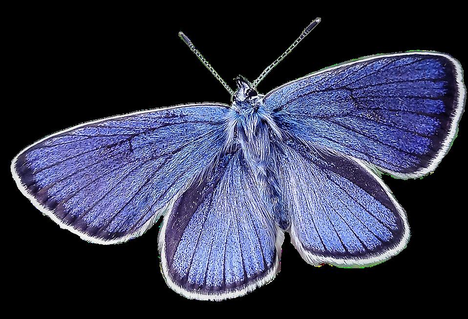 butterfly-2436395_1280